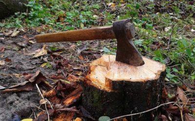 Alerte travaux forestiers : pas de travaux gênants en cours