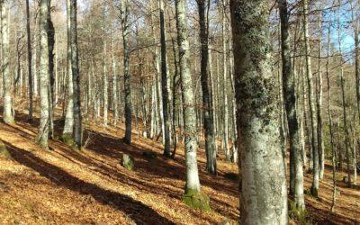 Instant nature : SYLVO-TROPHEE