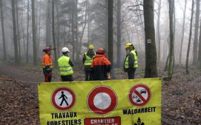 Alerte travaux forestiers sur les hauteurs de Saint Amarin